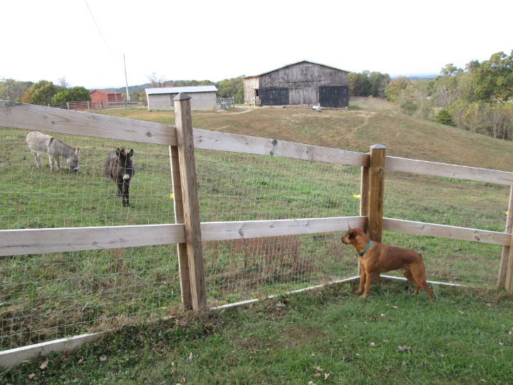 Welded Woven Wire Fencing